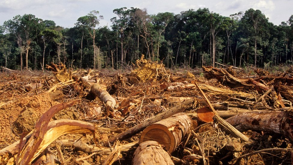 Deforestation of the jungle in the Amazon