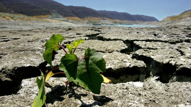 A plant seen on the parched ground of the Kouris reservoir in Alassa village near city of Limassol, Cyprus