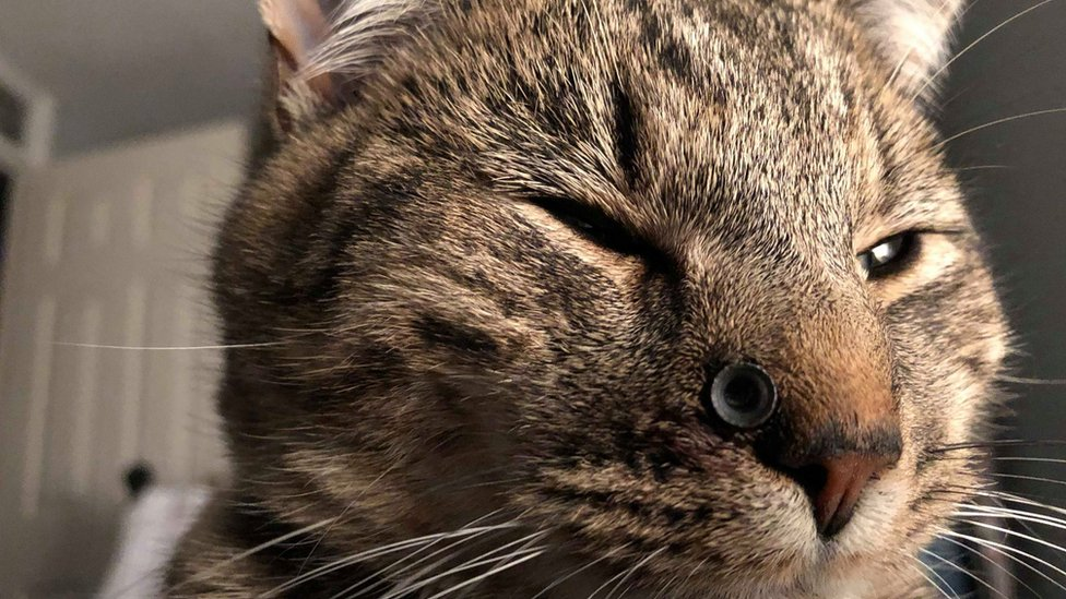 Air gun pellet stuck in Devon kitten's face