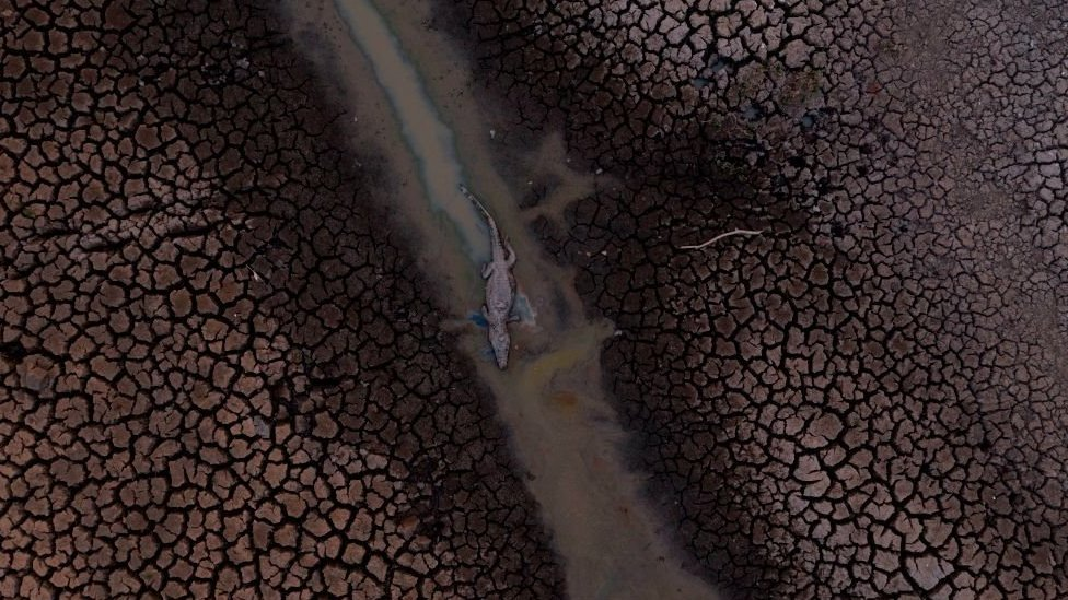 Aerial view of scorched land showing a dead alligator
