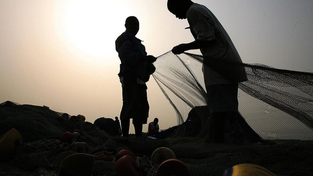 Algunos pescadores temen que retirar árboles del lago Volta pueda reducir las poblaciones de peces.