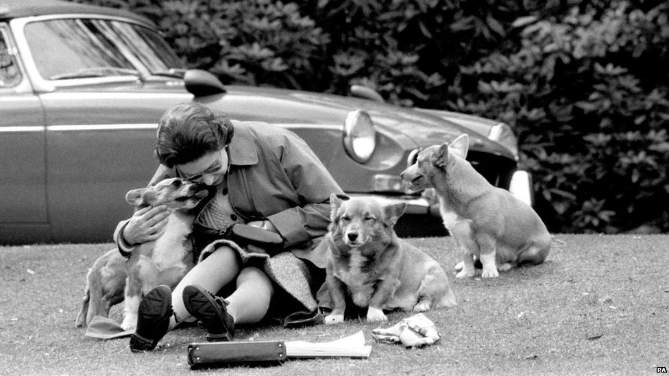 A black and white photograph of the Queen sitting on grass with three corgis