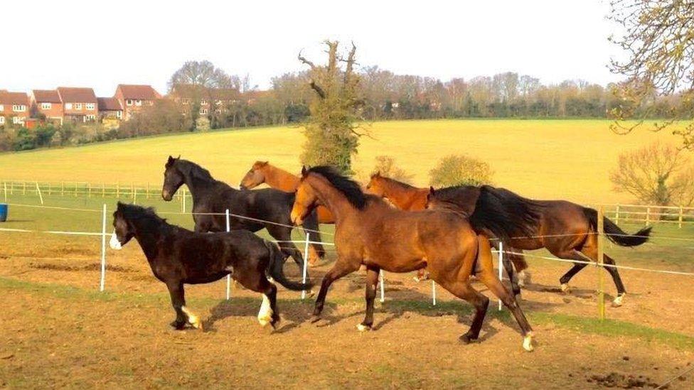 Hadleigh horse sanctuary faces eviction after land sale