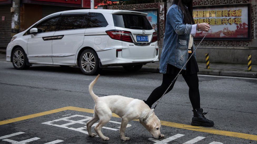 Chinese county to review decision to ban public dog walking thumbnail