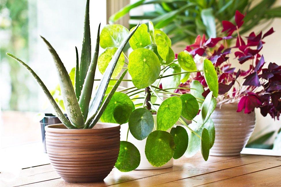 Plantas en el interior de una casa frente a una ventana