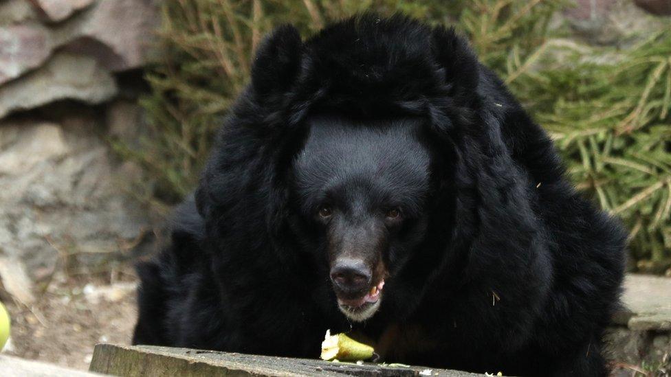 Medved u moskovskom zoo vrtu