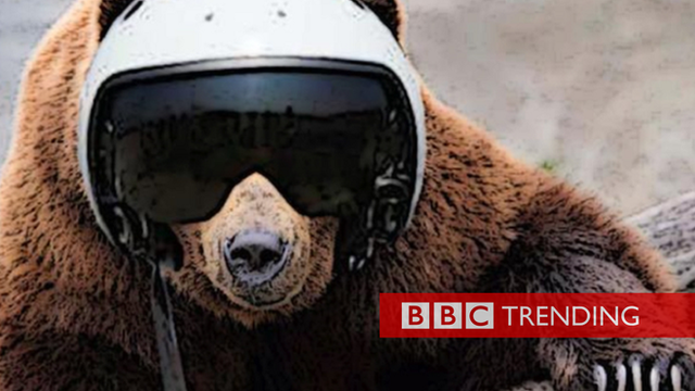 bear in helmet