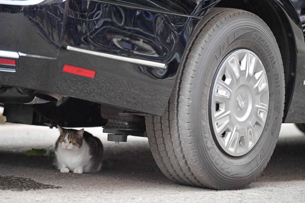"""Larry the Downing Street cat under Mr Trump's armoured Cadillac, known as the """"Beast""""."""