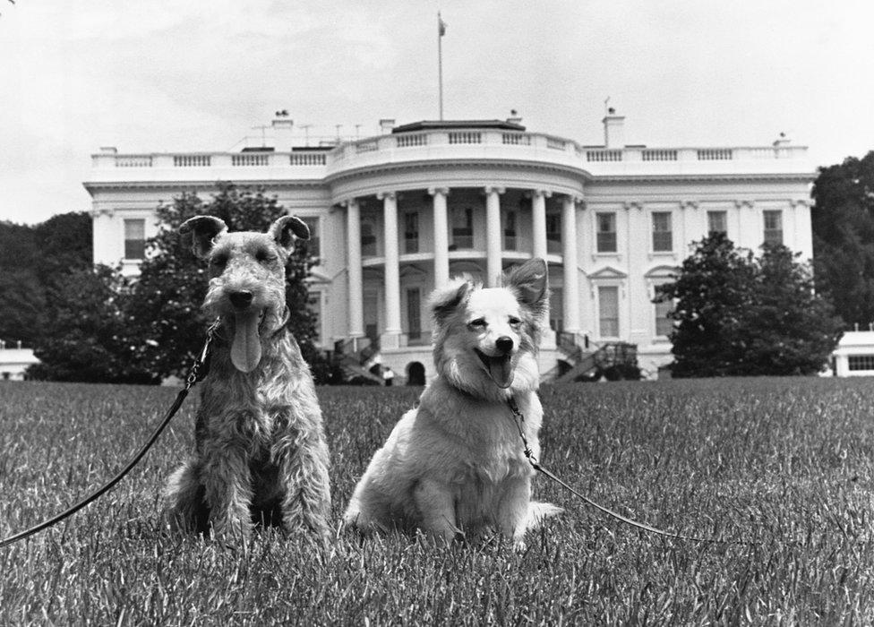 كلاب عائلة كينيدي تشارلي وبوشينكا يقفان أمام المصورين عام 1961.