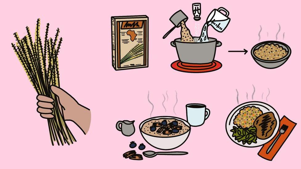 Ilustración de usos del fonio.