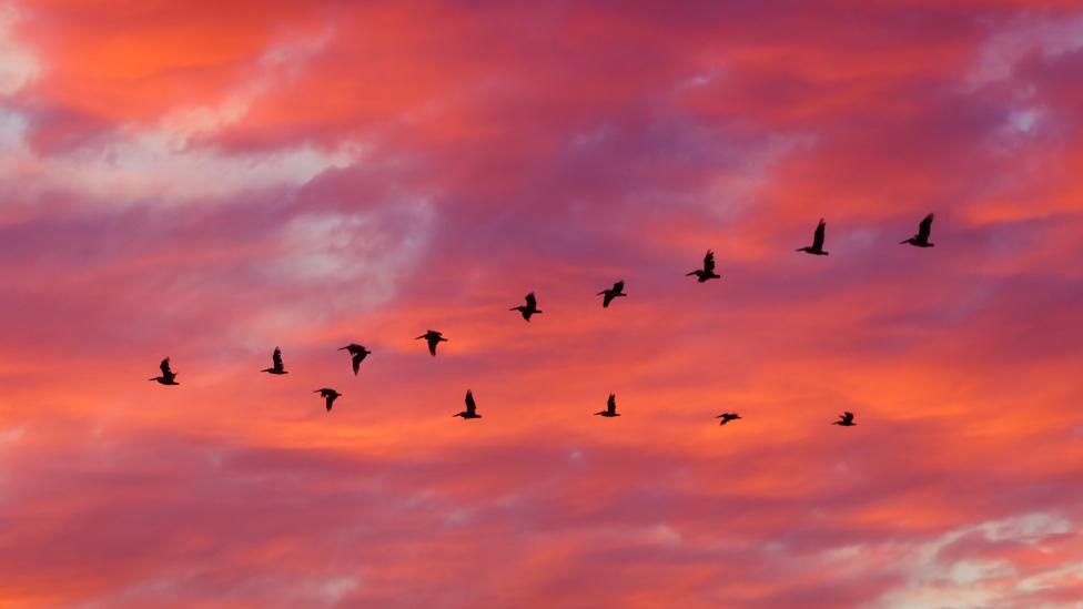 Formación de aves en un cielo rojizo