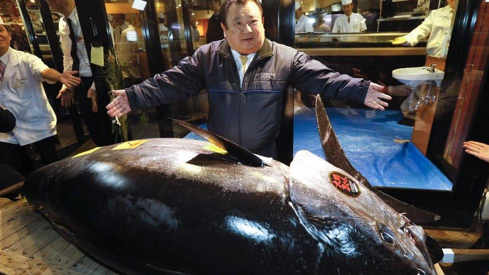 كيمورا يقف إلى جوار سمكة التونة