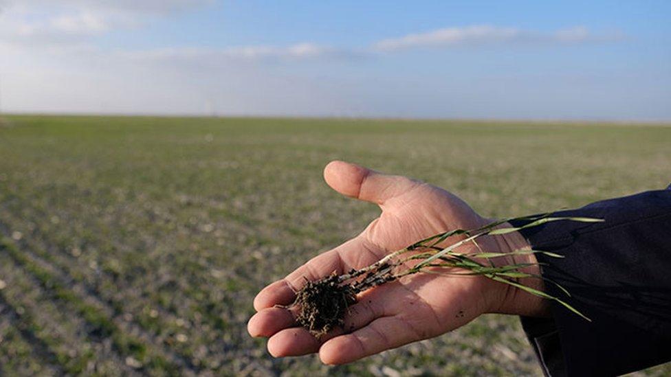 Üretim maliyetlerindeki artış nedeniyle bazı çiftçiler zararına üretim yapmaktansa üretime ara vermeyi tercih ediyor