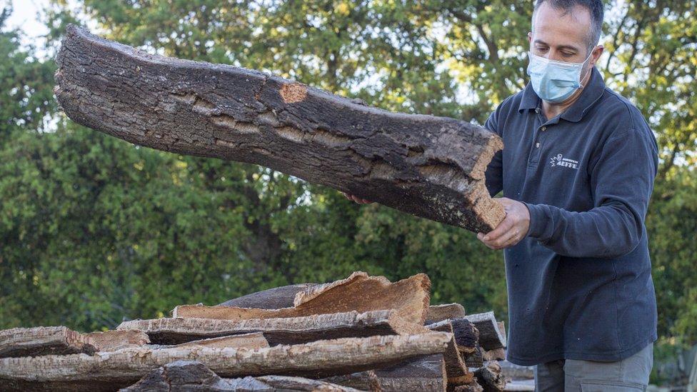 意大利撒丁島滕皮奧保薩尼亞鎮一家工場內工人在處理剛採下的軟木塊(22/5/2020)