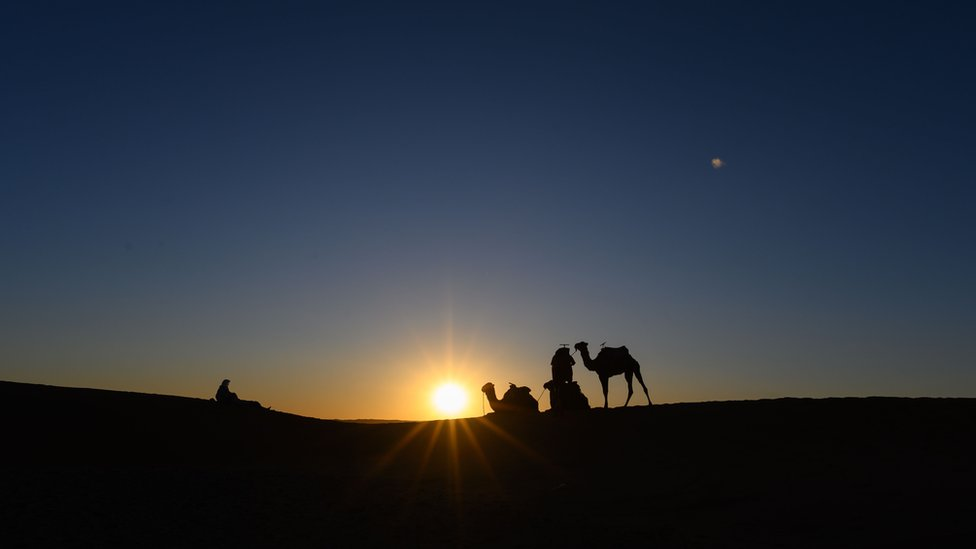 """Camels are pictured at sunset prior the arrival of the competitors during the desert trek """"Rose Trip Maroc"""", on November 1, 2019 in the erg Chebbi near Merzouga. - The Rose Trip Maroc is a female-oriented trek where teams of three must travel through the southern Moroccan Sahara desert with a compass, a map and a topographical reporter."""