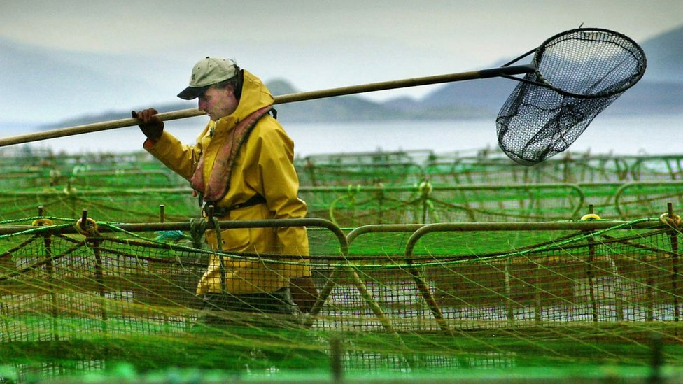 Marine Harvest sees 'bright future' in Scotland