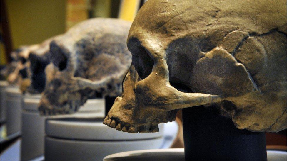 Cráneos de neandertales
