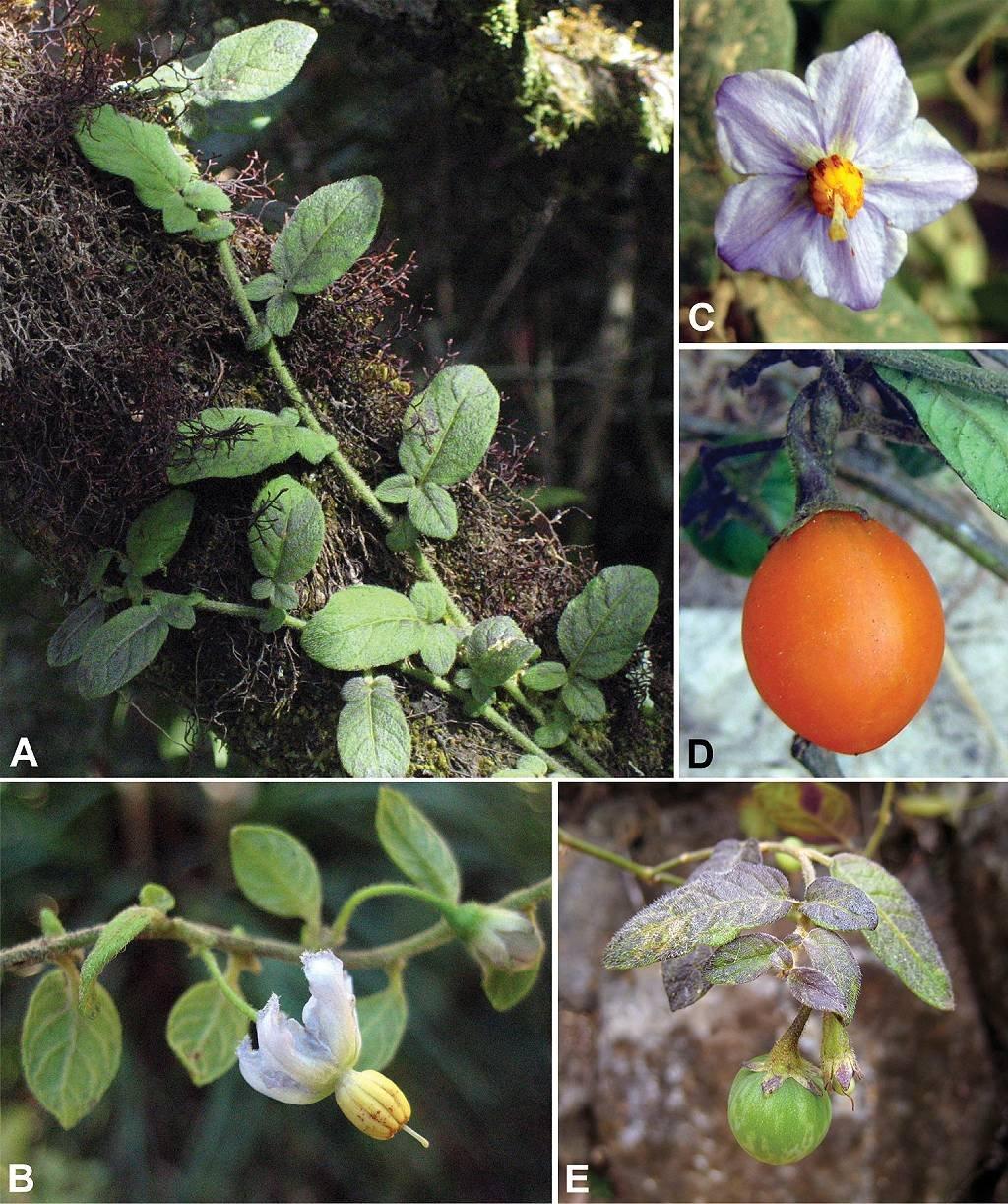 Imagen con planta y detalles
