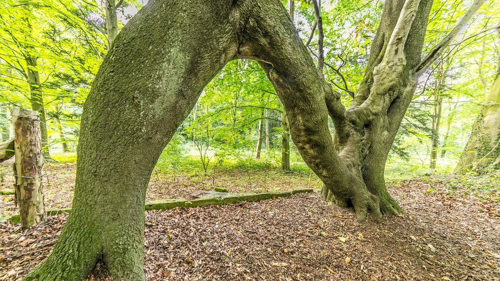 Nellie's Tree wins England's Tree of the Year