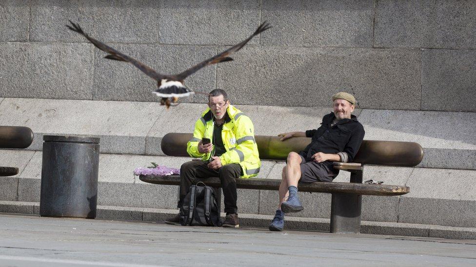 People watch as Harris hawk Lighten flies in Trafalgar Square, 13 June 2020