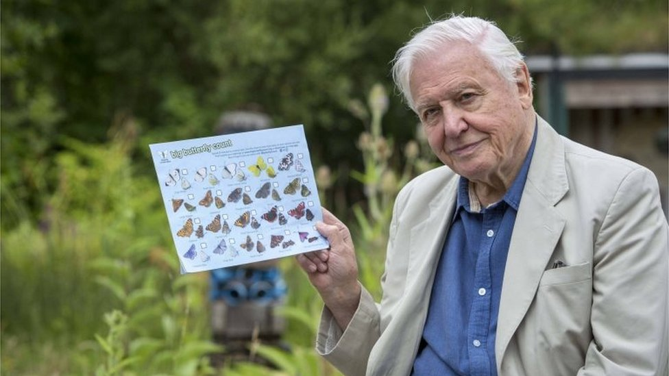 David Attenborough urges mass butterfly count