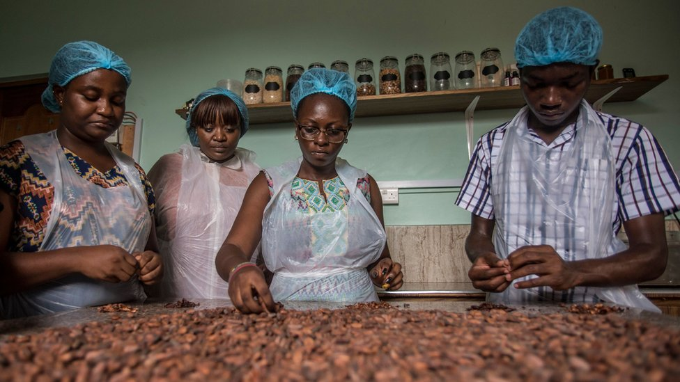 Workers sorting cocoa beans