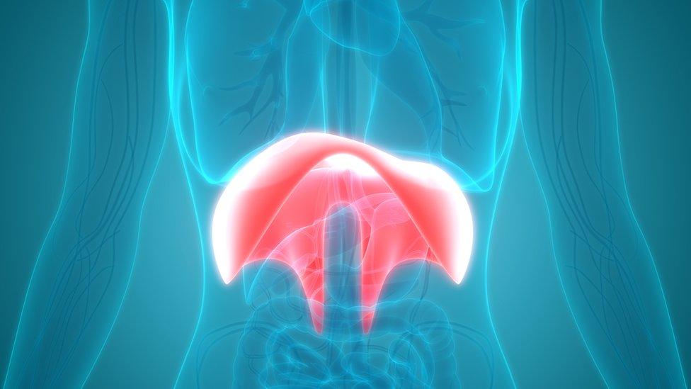 Ilustración de un cuerpo humano donde se resalta la posición del diafragma.