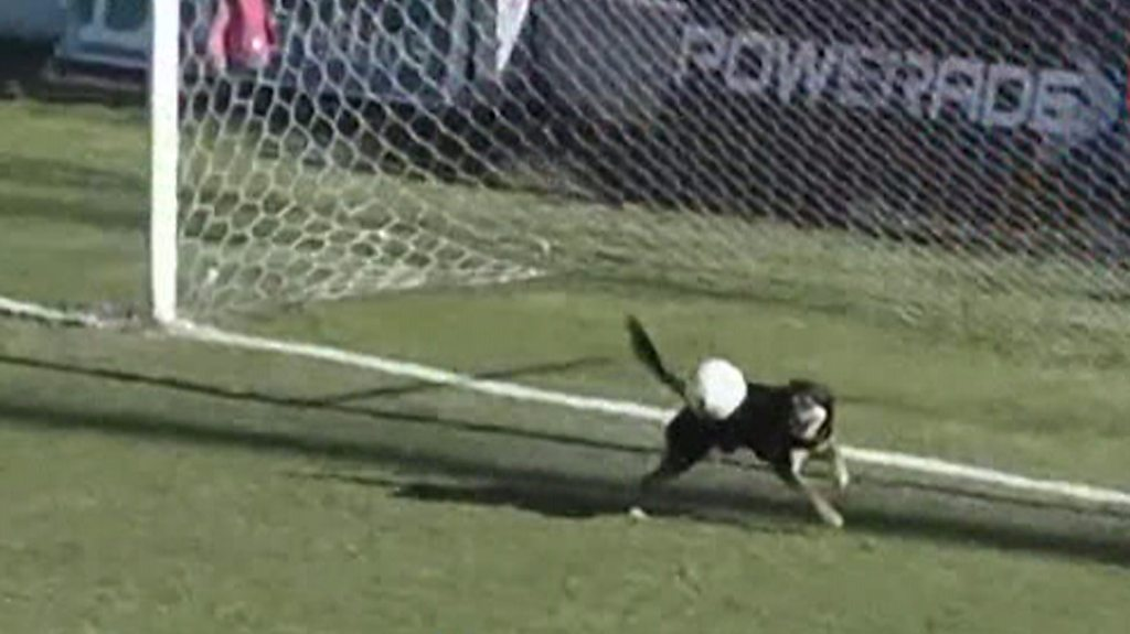 Dog makes amazing goalline save in third division Argentine match