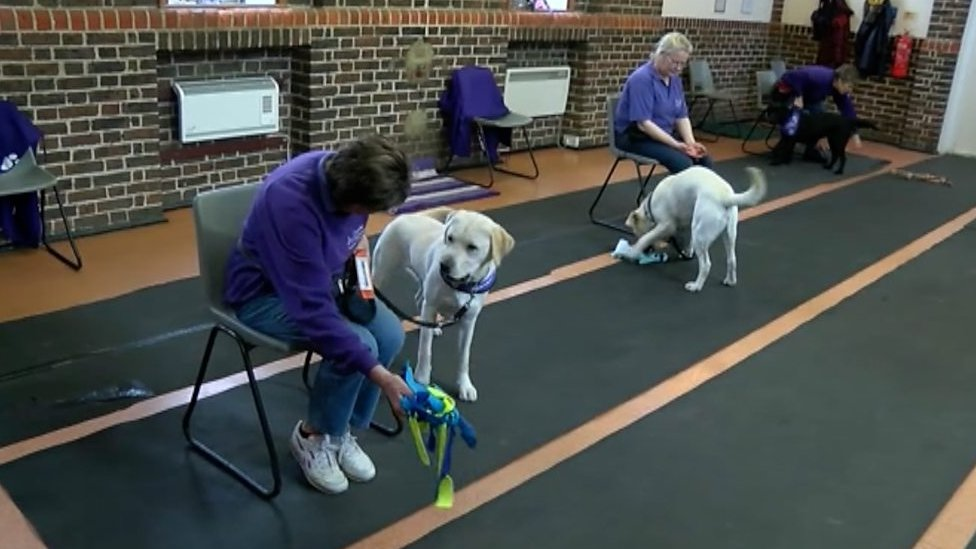 Puppies taught life-changing assistance in Sussex