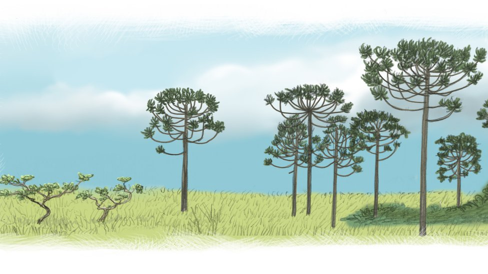 Antes dos portugueses, SP teve floresta tropical, Cerrado e mini-Pantanal