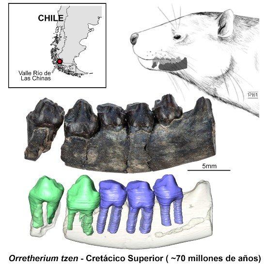 Ilustración de la mandíbula y dientes hallados