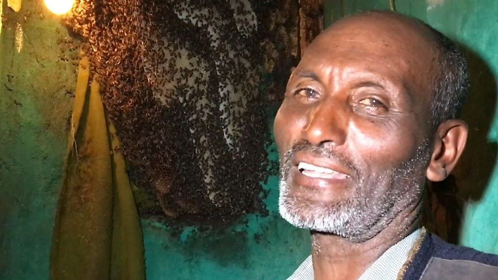 The mystery behind Ethiopia's 'father of bees'