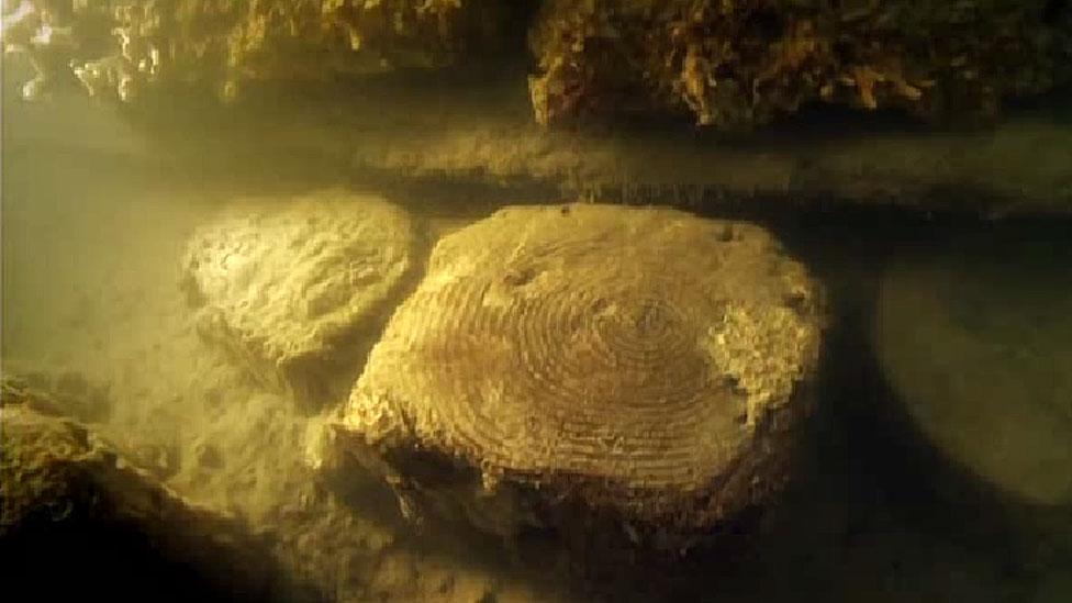 troncos bajo el agua