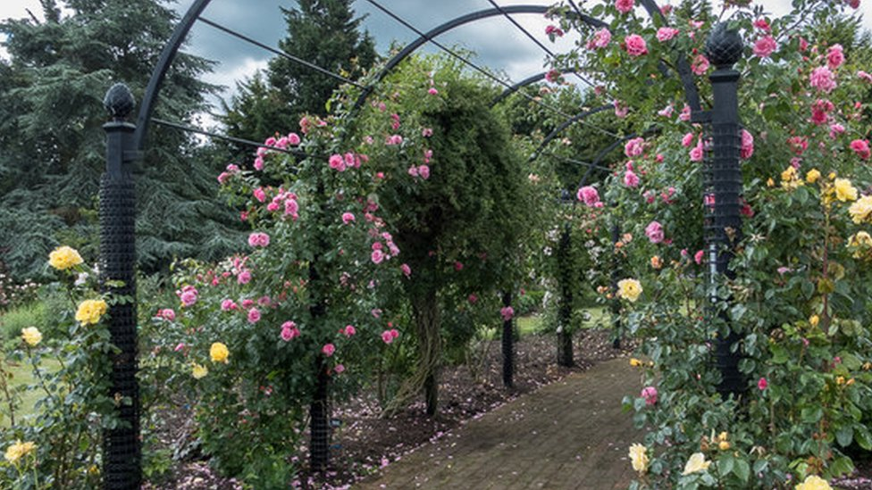 Gardens of the Rose near St Albans