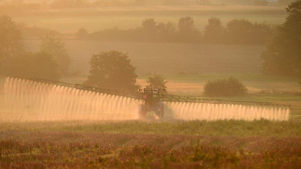 Cultivos en Francia rociados con glifosato