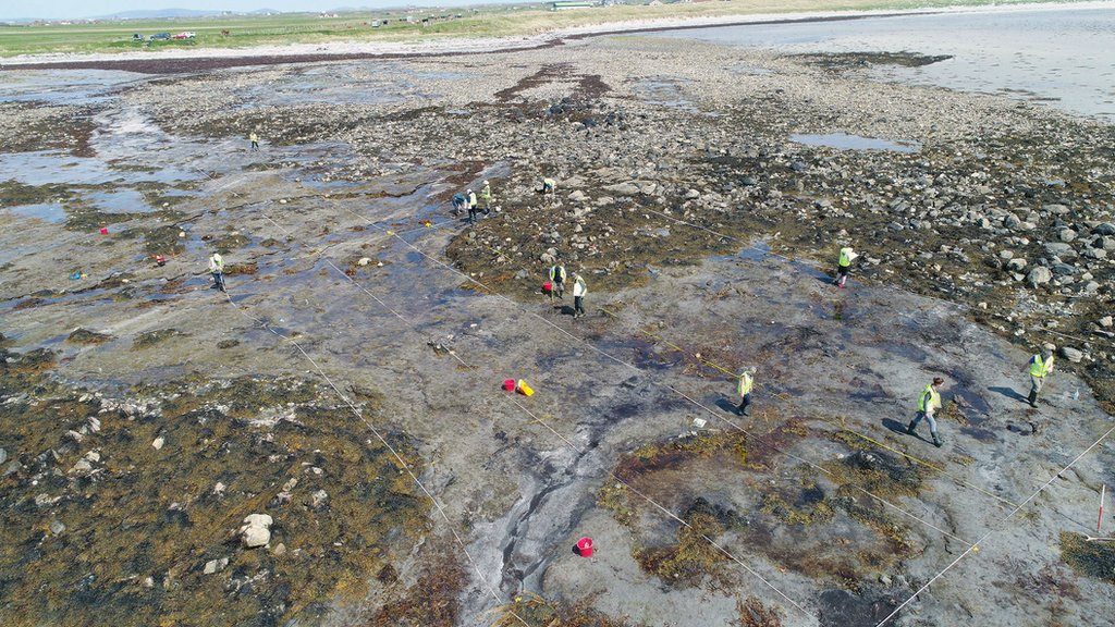 An aerial view of local volunteers mapping and recording the submerged forest