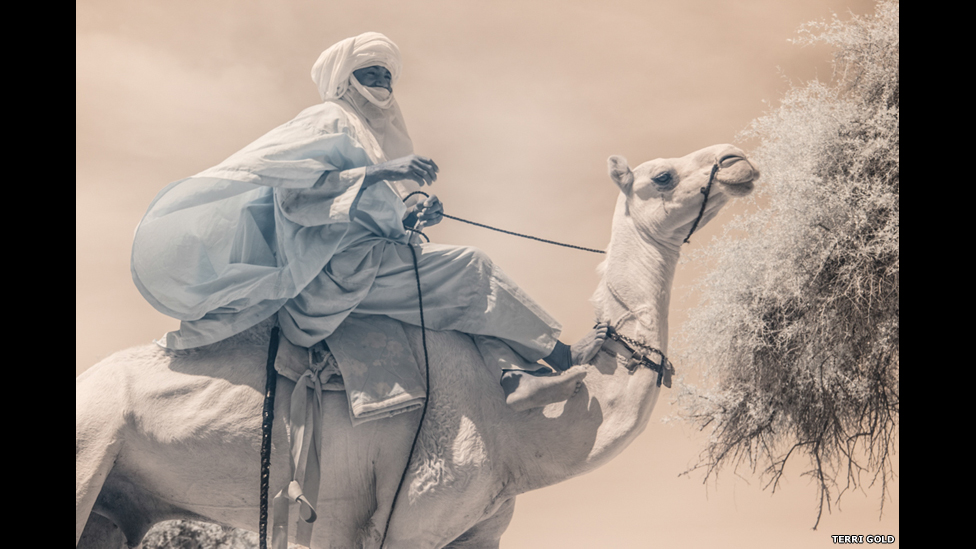 Man riding a camel