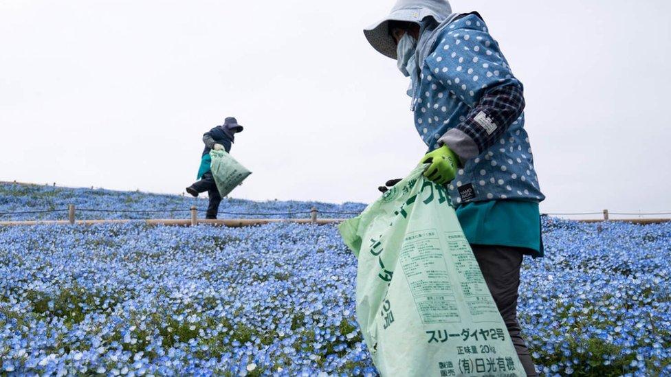 كيف أثر الوباء على صناعة الزهور؟