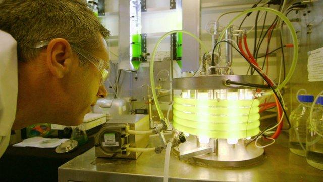 Spencer Kelly looks at a photobioreactor containing algae