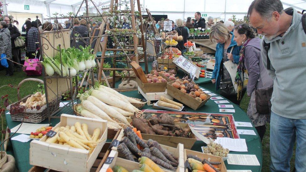 Mel Williams o Gwaelod-y-Garth yn edmygu'r moron // Mel Williams from Gwaelod-y-Garth taking a close look at the carrots on show