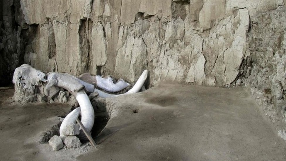 Huesos de mamut que sobresalen en el sitio de excavación de Tultepec