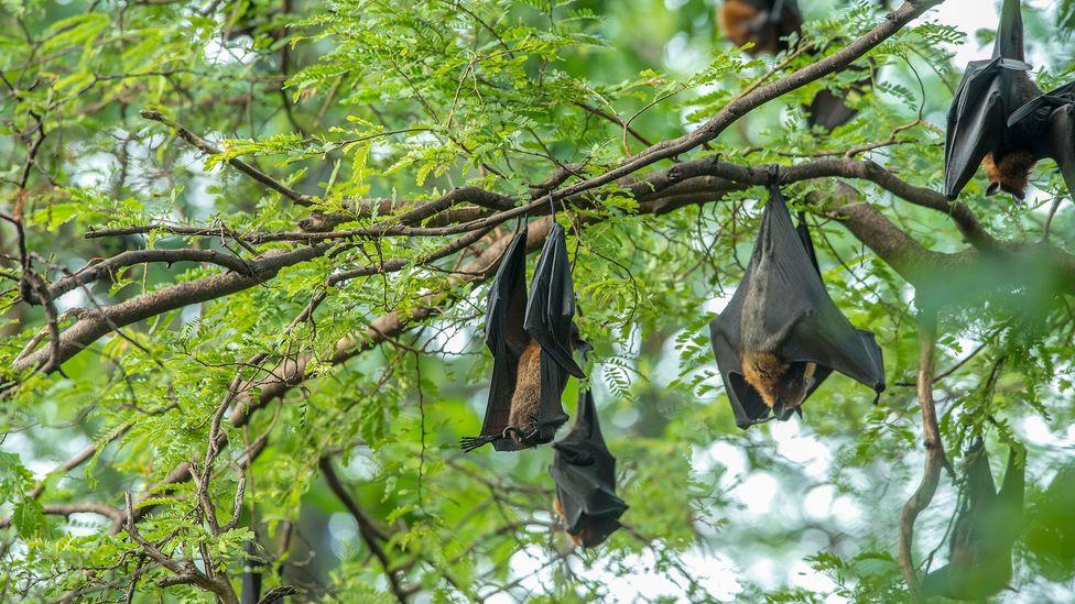 Murciélagos