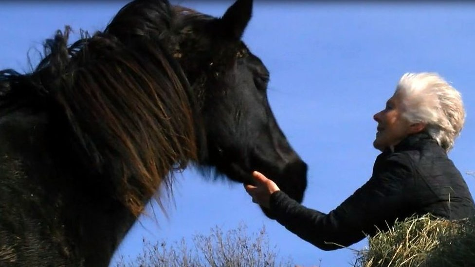 'My horse saved me from anorexia'