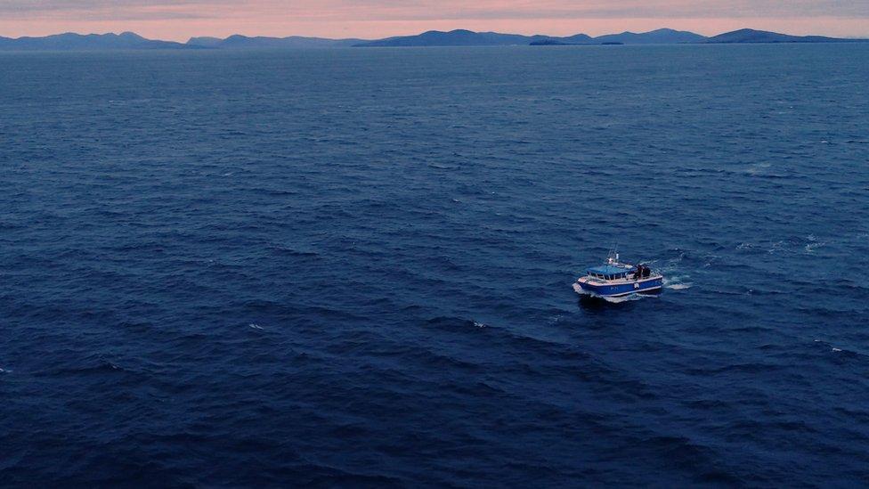 Tuna research