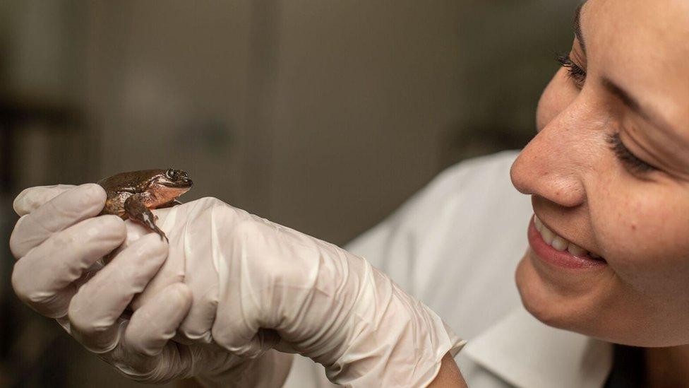 Romeo, la rana que buscaba novia por internet, ya encontró pareja