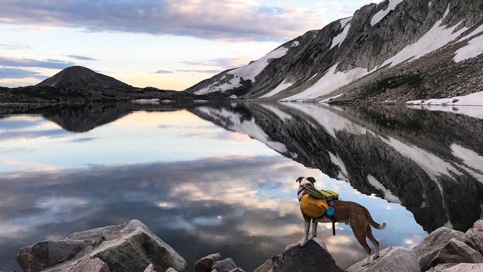 El perro frente a un lago rodeado de montañas.