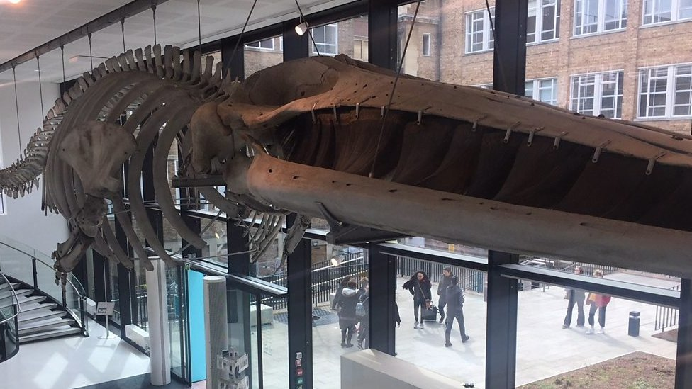 Cambridge Museum of Zoology reopens after £4m facelift