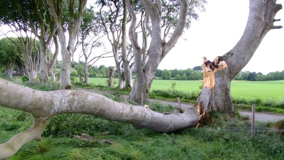 Trees damaged in Storm Hector at Dark Hedges
