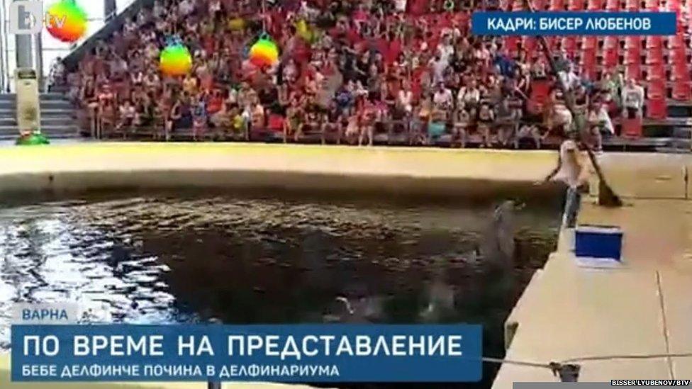 Delfini tokom performansa u delfinarijumu u Varni