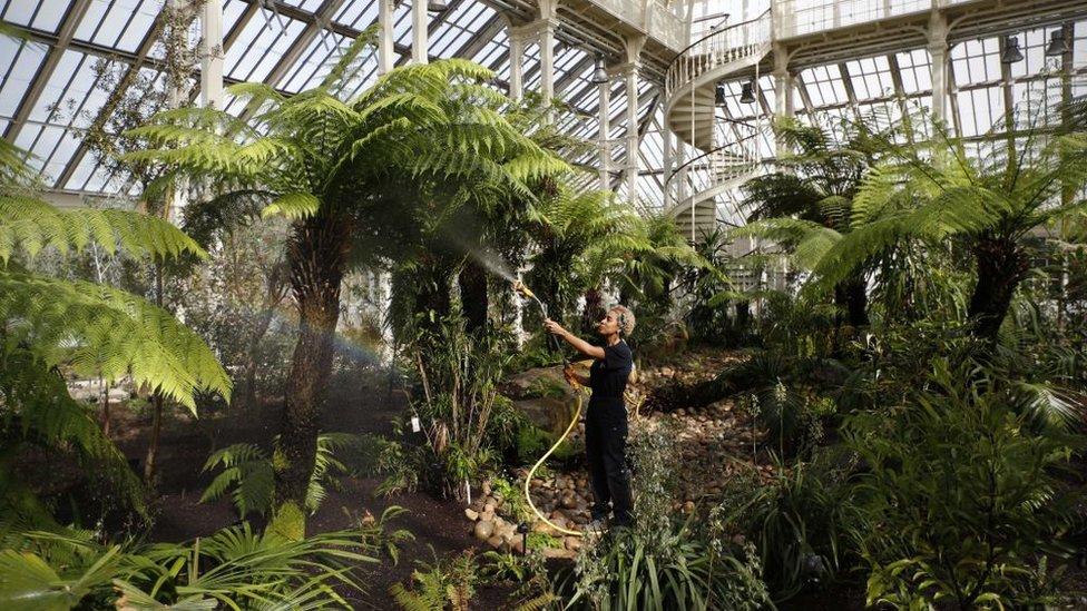 2018年3月,園藝工作者在邱園的溫帶植物溫室中澆水。